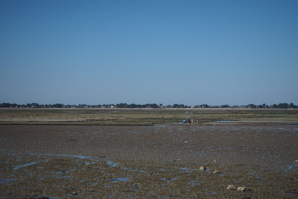 Oyster fields in St.Vaast being harvested with a tractor