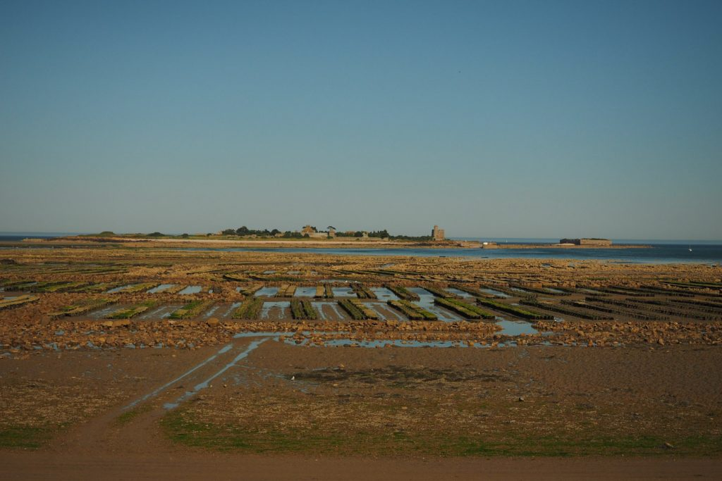 More Oyster fields off St.Vaast