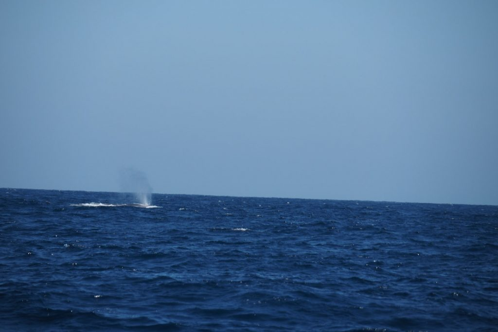 A whale blowing in the Bay of Biscay...