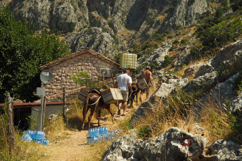 Donkeys transporting goods in Montenegro mountains